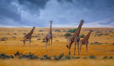 Namibia safary