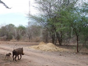 Zimbabwe Animals 001