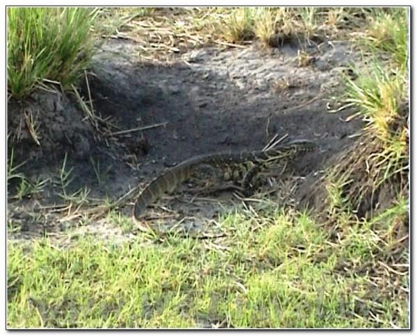 Botswana Chobe 021