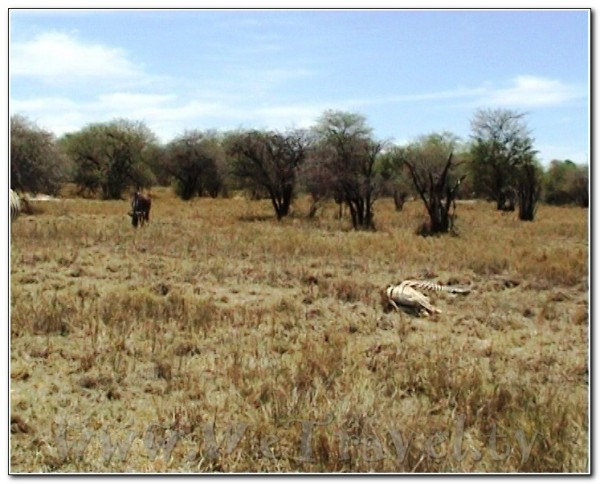 Namibia Etosha 005
