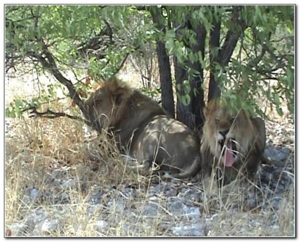 Namibia Etosha 042
