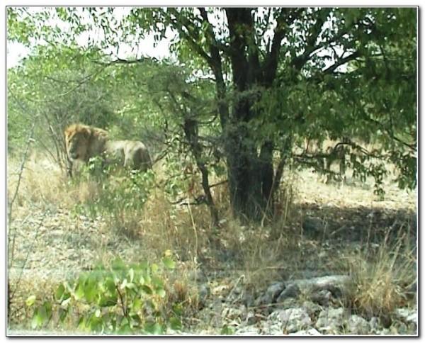 Namibia Etosha 045