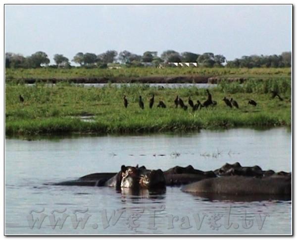 Botswana Chobe 014