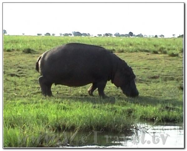 Botswana Chobe 018