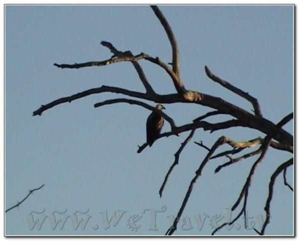 Botswana Chobe 033