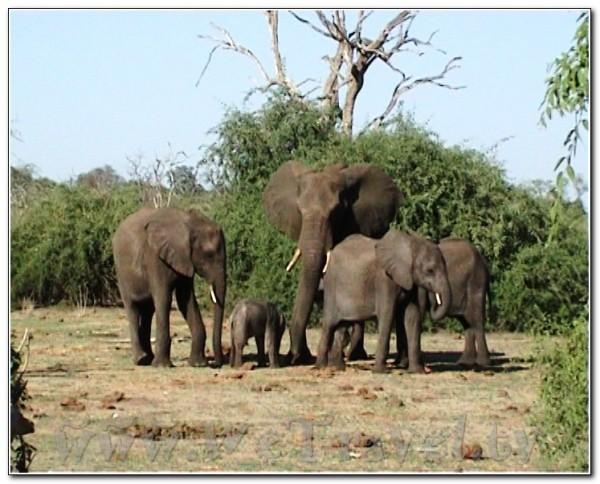Botswana Chobe 044