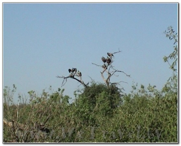 Botswana Chobe 048