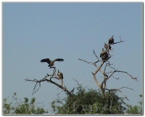 Botswana Chobe 049