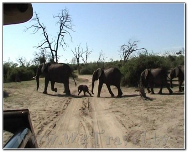 Botswana Chobe 062