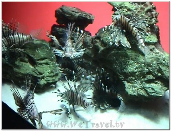 Capetown Aquarium 2