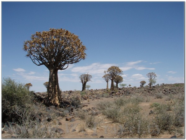 Kokerboom Forest - Giant's Playground near Keetmanshoop - Namibia