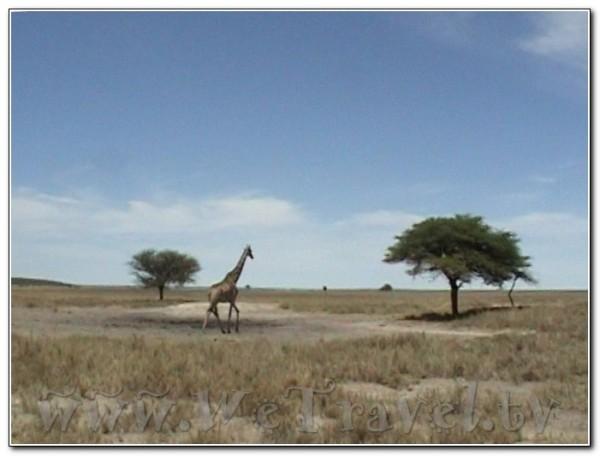 Namibia Etosha 001