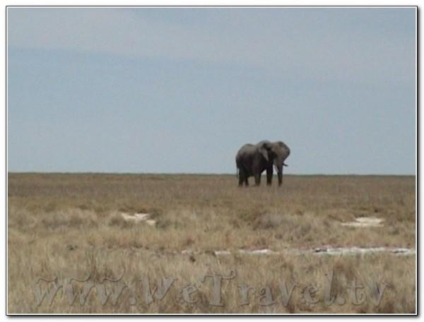 Namibia Etosha 003