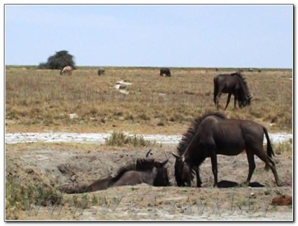 Namibia Etosha 006