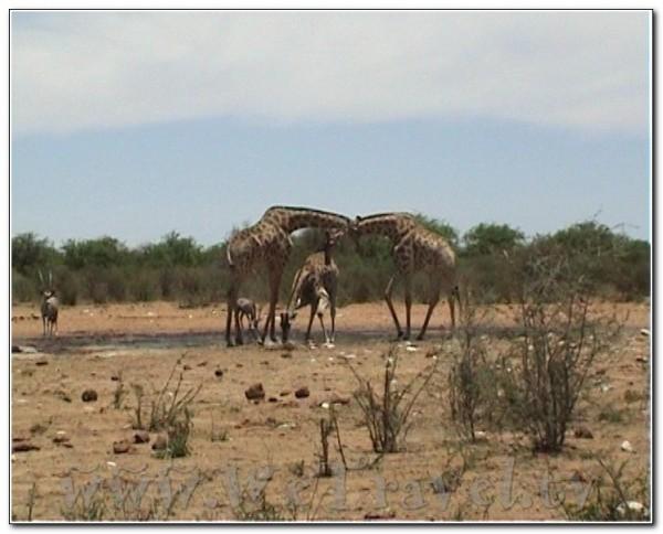 Namibia Etosha 008