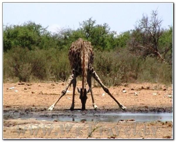 Namibia Etosha 014