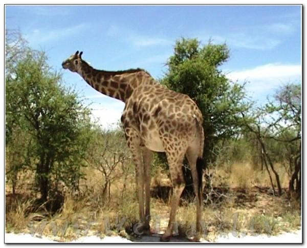 Namibia Etosha 017