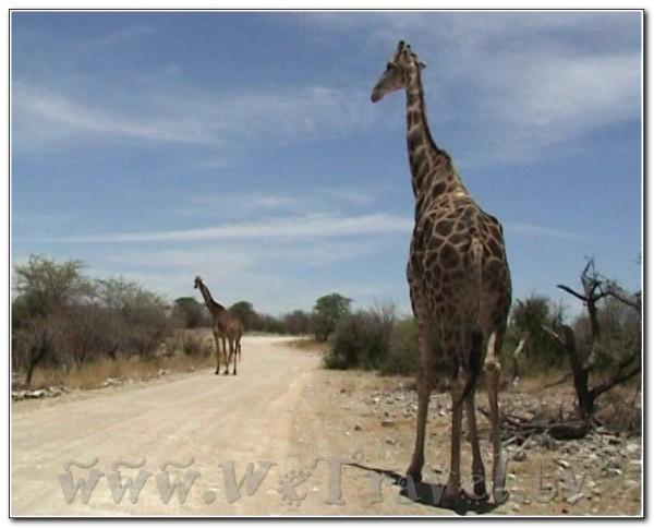 Namibia Etosha 023