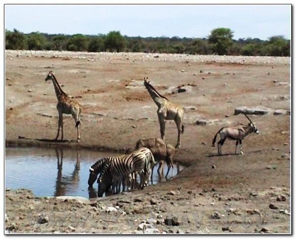 Namibia Etosha 033