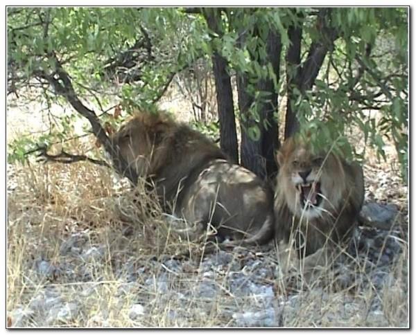 Namibia Etosha 043