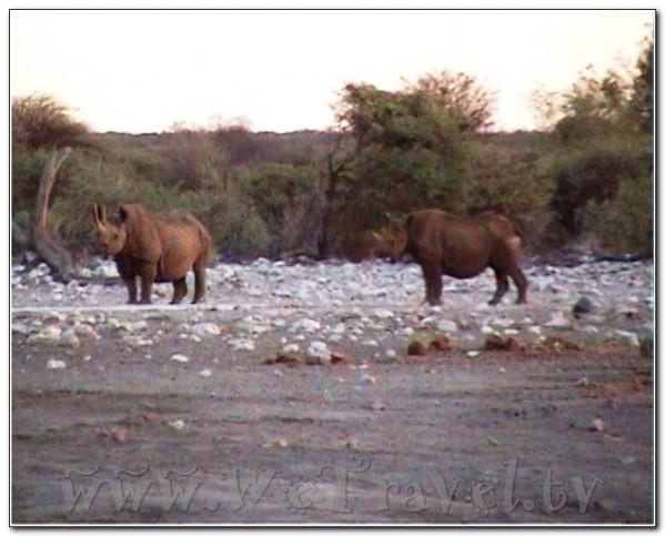 Namibia Etosha 052