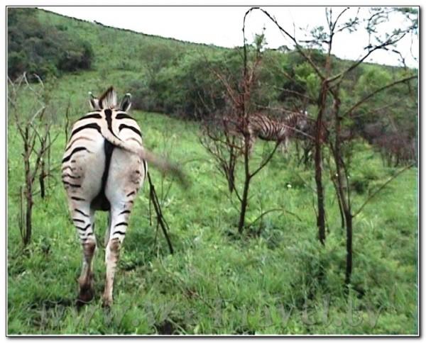 Republic of South Africa Hlu Hluwe 010