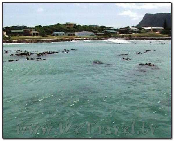 Republic of South Africa White Shark Diving Gansbaai 002