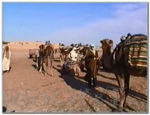 Tunisia Tunis Sahara Sousse Jeep 006