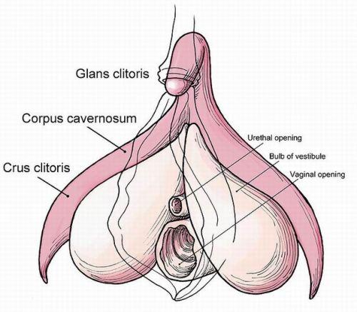 big ass & big boobs_13