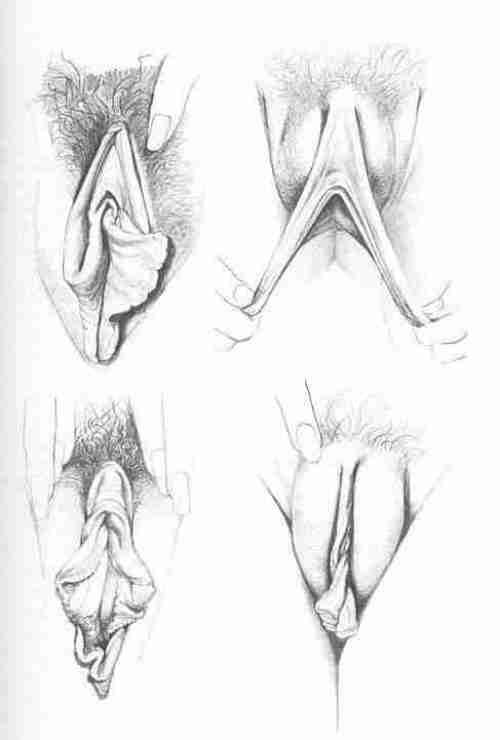 Вагины рисунки
