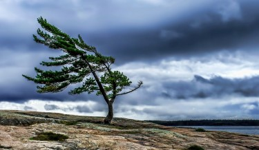 Lone Pine 6
