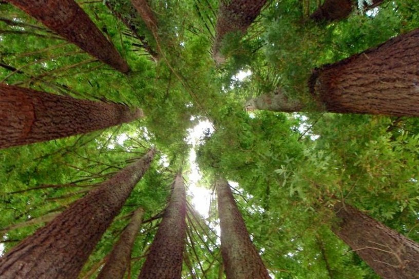 Sequoia National Park 21