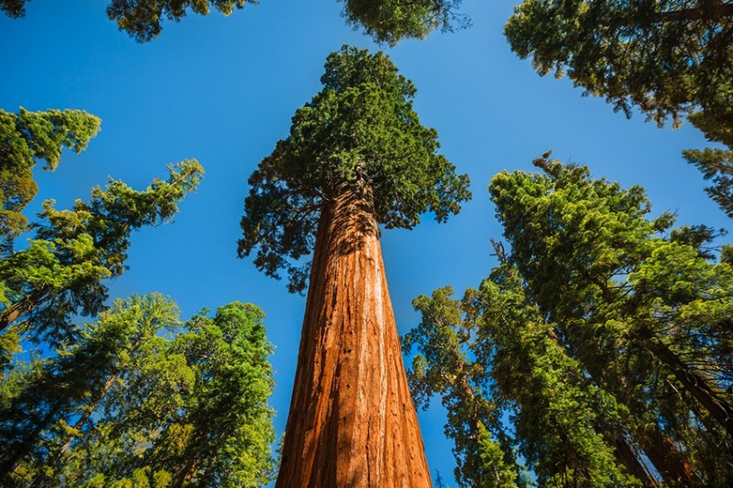 Sequoia National Park 5