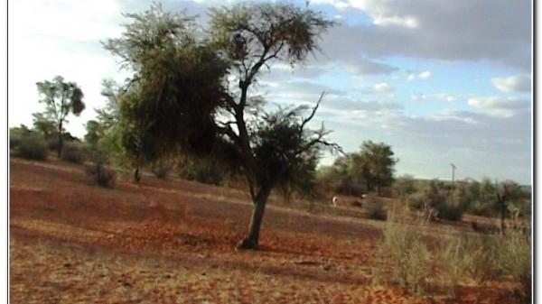 Namibia Botswana Kalahari 002