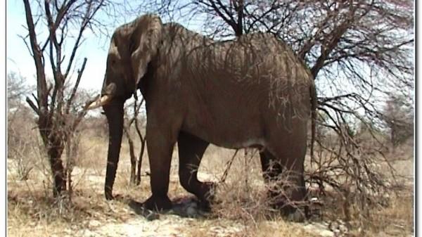 Namibia Etosha 021