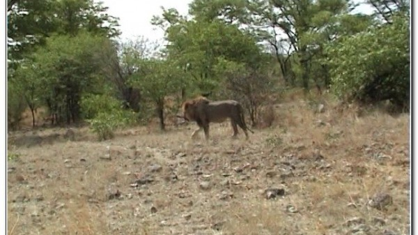 Namibia Etosha 047
