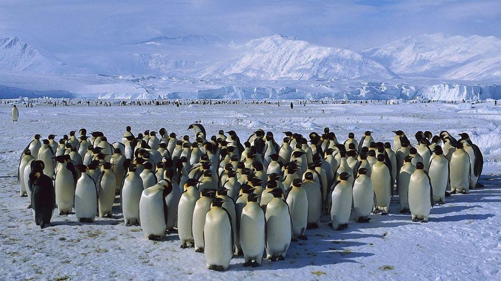 Ross Sea 3