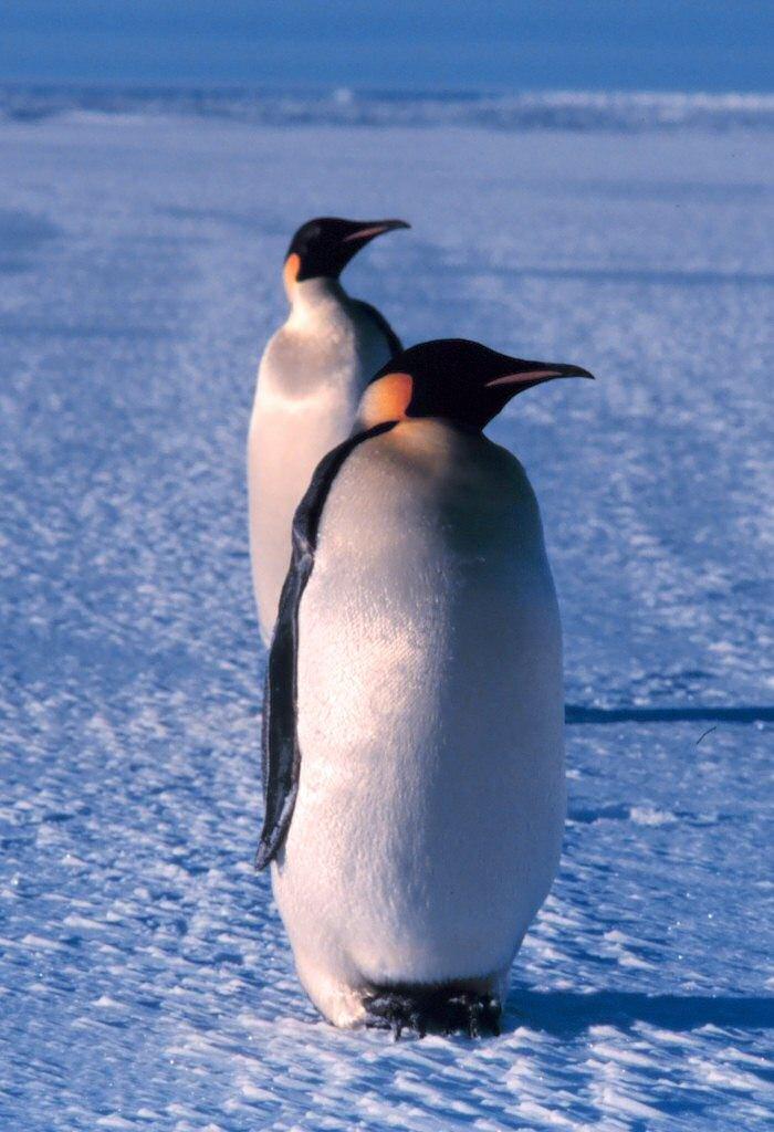 Ross Sea 7