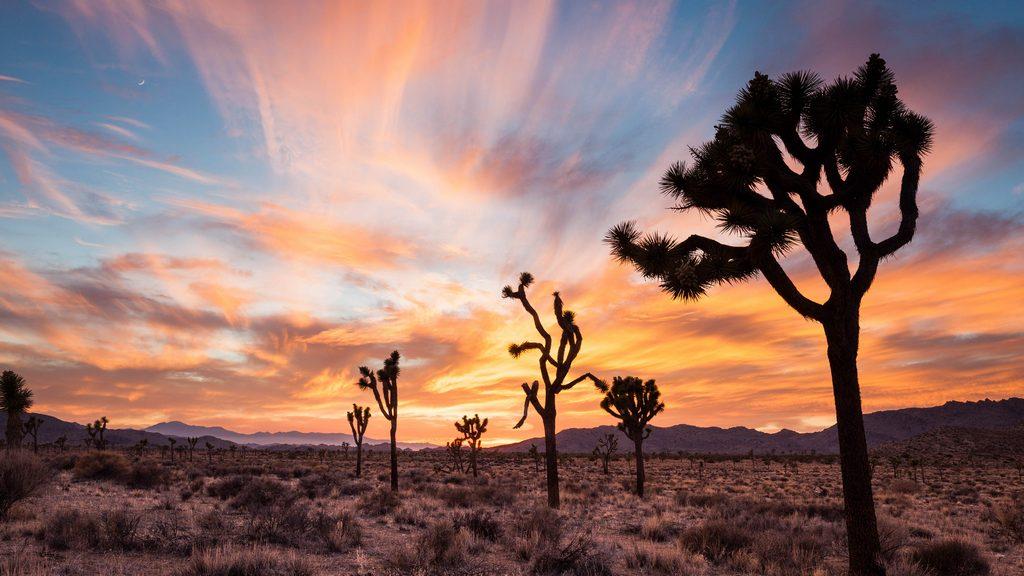 Palm Springs desert 2