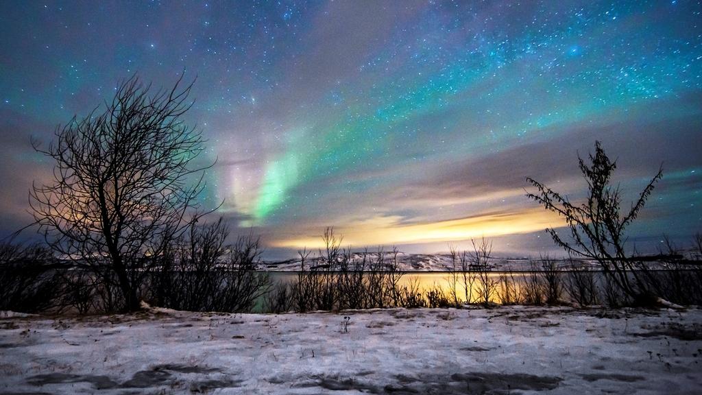 arctic 8