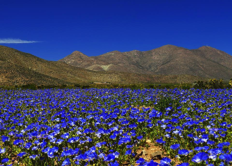 Desierto de Atacama 2