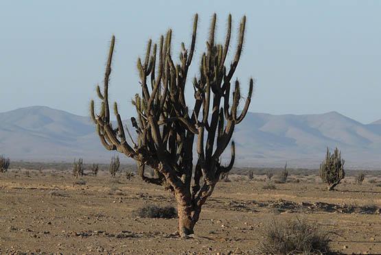 Desierto de Atacama 7