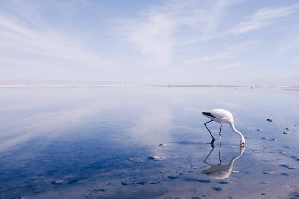 Фламинго в сухом озере