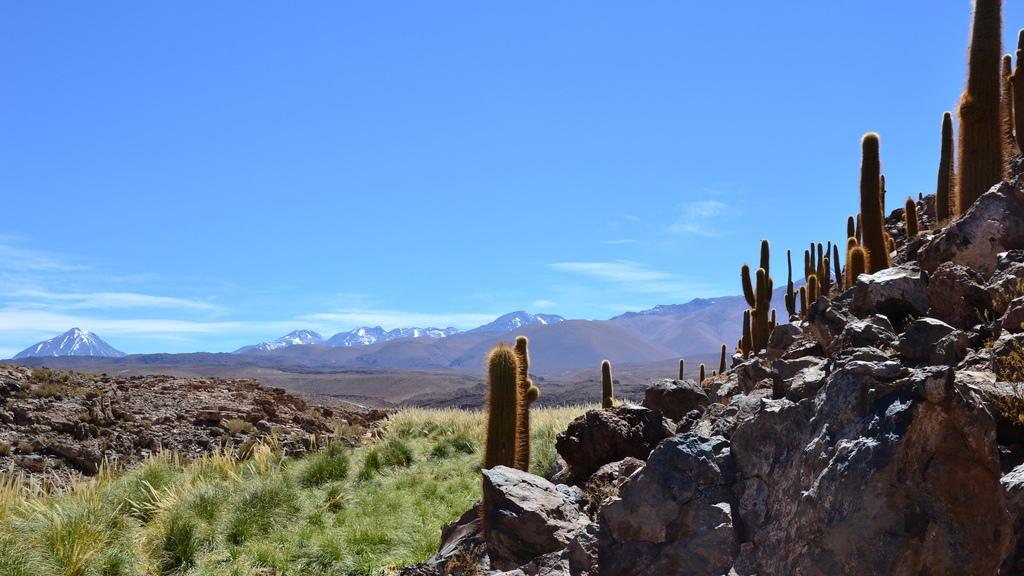 Долина кактусов в Атакаме