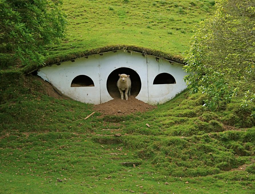 После окончания съемок Хоббитон  на время был заброшен, повсюду паслись овцы