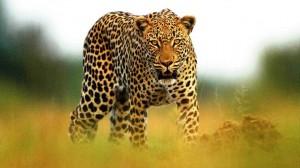 Африканское королевство Свазиленд