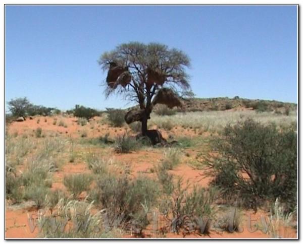 Angola Desert 001