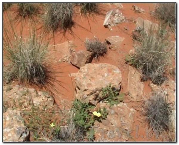 Angola Desert 002