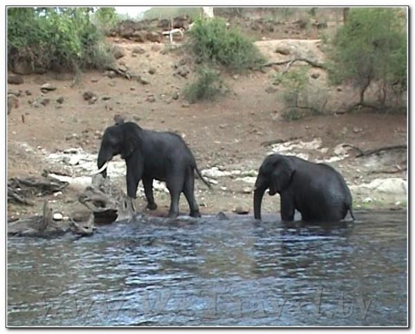 Botswana Chobe 001