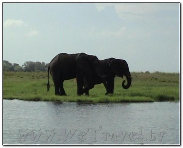 Botswana Chobe 006
